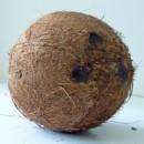 Kokos z lateksem – idealnie dobrana para