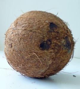 kokos mayerace-dla-ciebie