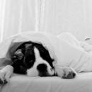 Ja i mój materac – kilka słów o higienie snu i użytkowaniu materaca :)